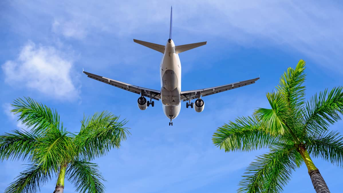View from below of airplane flying over palm trees